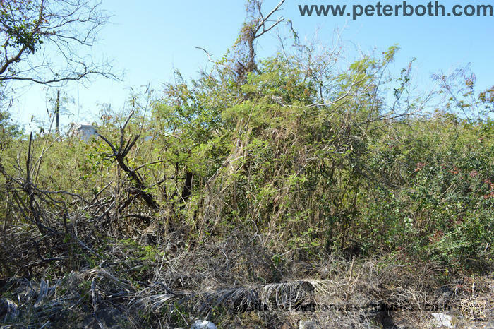 For sale land in Pereybere.