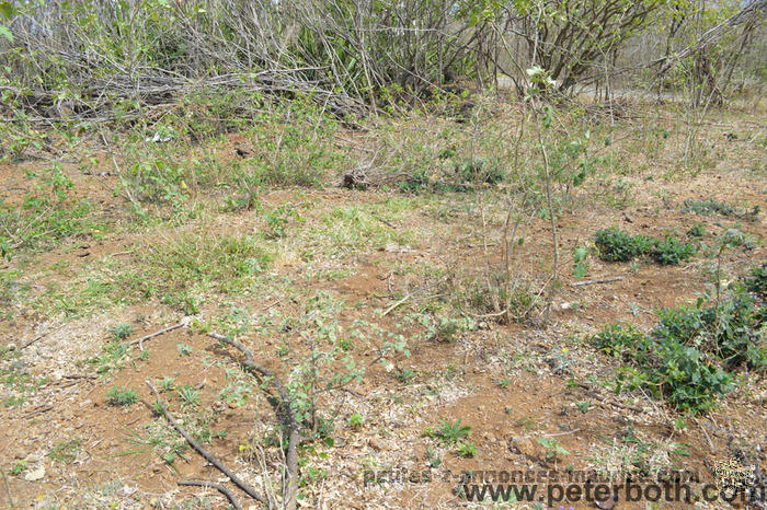 For sale land in Pereybere
