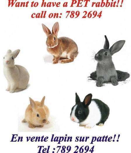 Idées cadeaux:lapins/lapineaux sur pattes a vendre