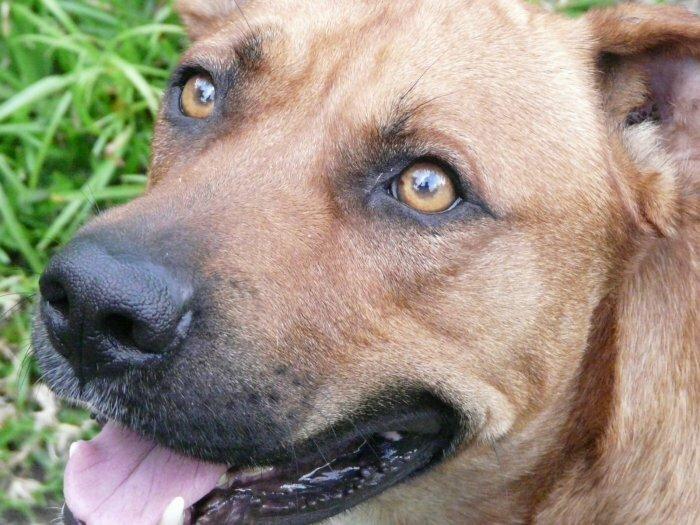Trouve chien sur Port Louis