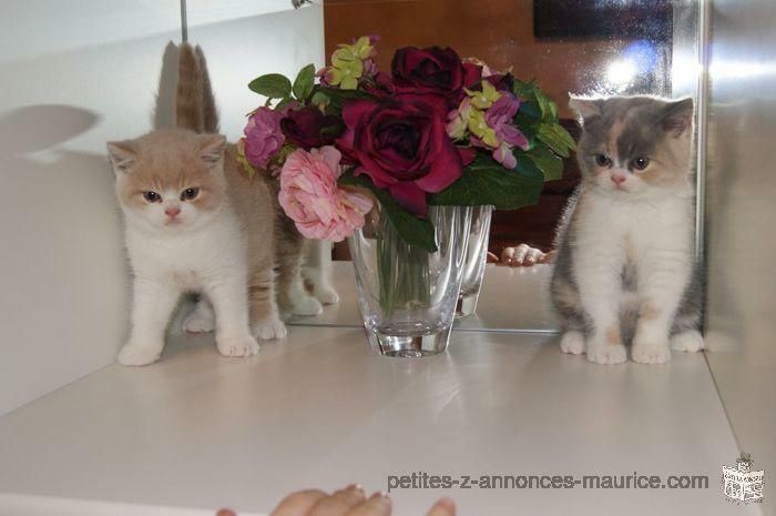 Urgent Deux Chatons Mâle Et Femelle!