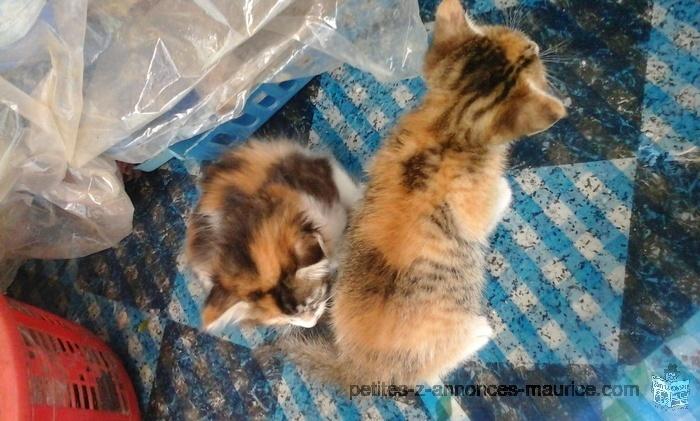 chatons a donner gratuitement