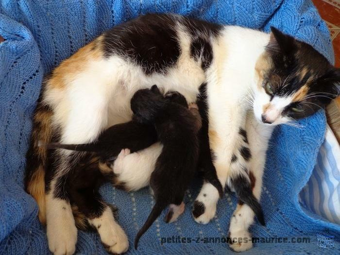 donne chatte et ses chatons